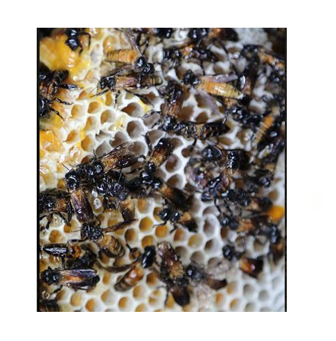 优质热带雨林蜂蜜味薯条罐装休闲零食