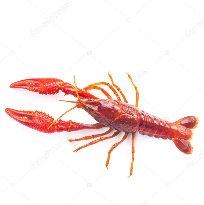 Supply Nigerian crayfishes  Nigerian crayfish