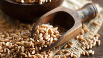 TRADITIONAL GRAINS ARE MAKING A COMEBACK