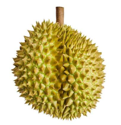 Supply Thailand Durian