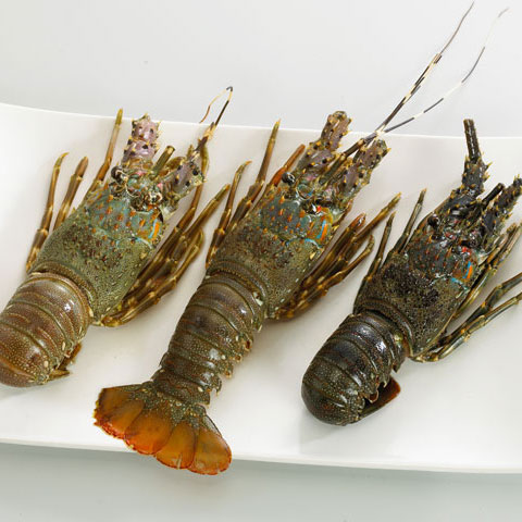 Purchase Imported African Green Lobster Seafood