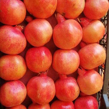 Offer Egyptian Good Quality Pomegranate Fruit