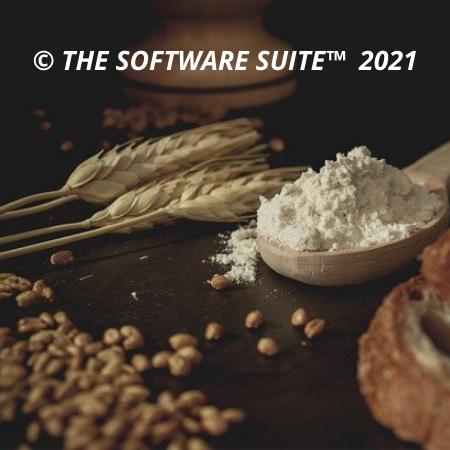 Soft Wheat Grains Non-GMO for Human Consumption