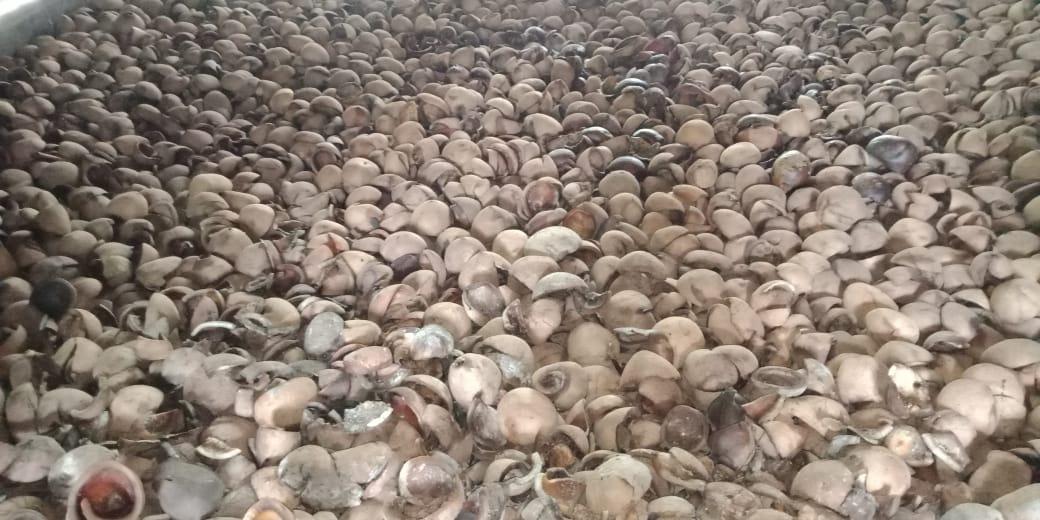 Copra (dried coconut)