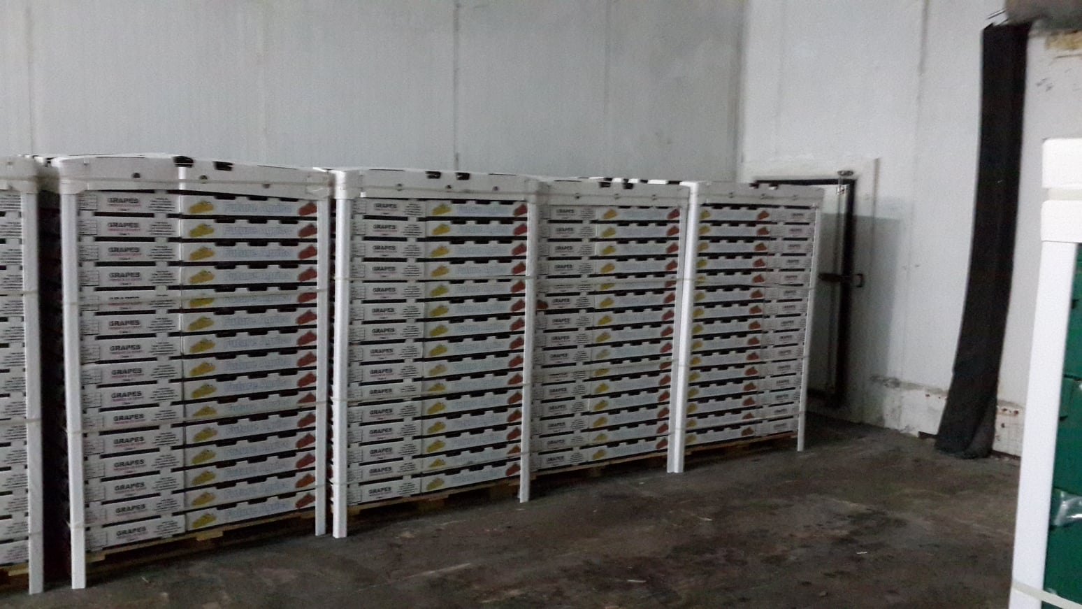Supply fresh grapes available with high quality and competitive price