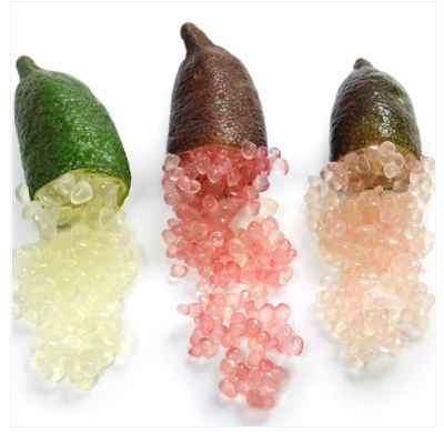 Sicilian finger lime MONIL Luxury fruit Italy