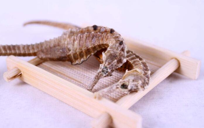 Buy Dried Sea Horse