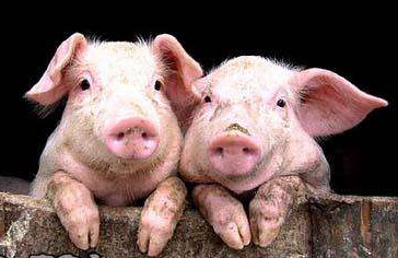 China's pork supply to continue improving amid policy supports, import hikes | FOOD2CHINA NEWS