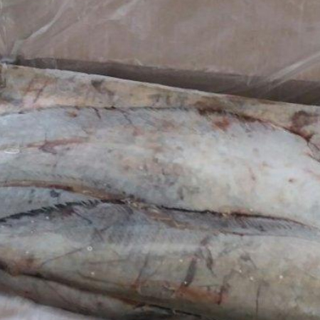 fish and sea food,frozen fish,Imported fish from Russia