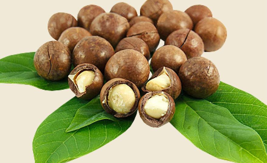AFood  Hazel nuts price/ bulk