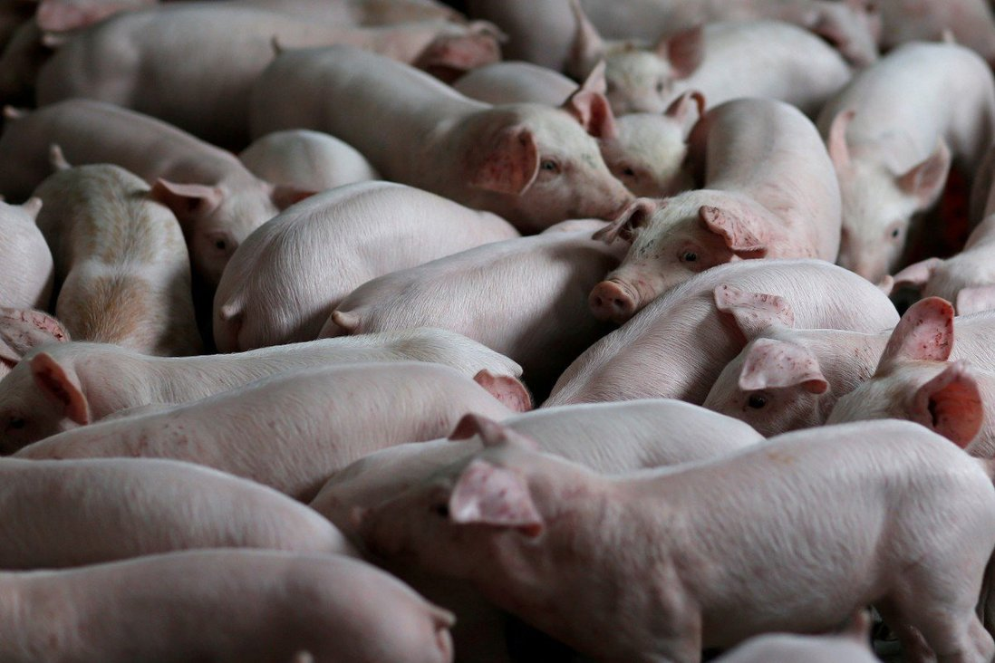 China's pork output recovered 'higher than expected' last year after African swine fever ravaged 2019丨Food2china  MOMENTS