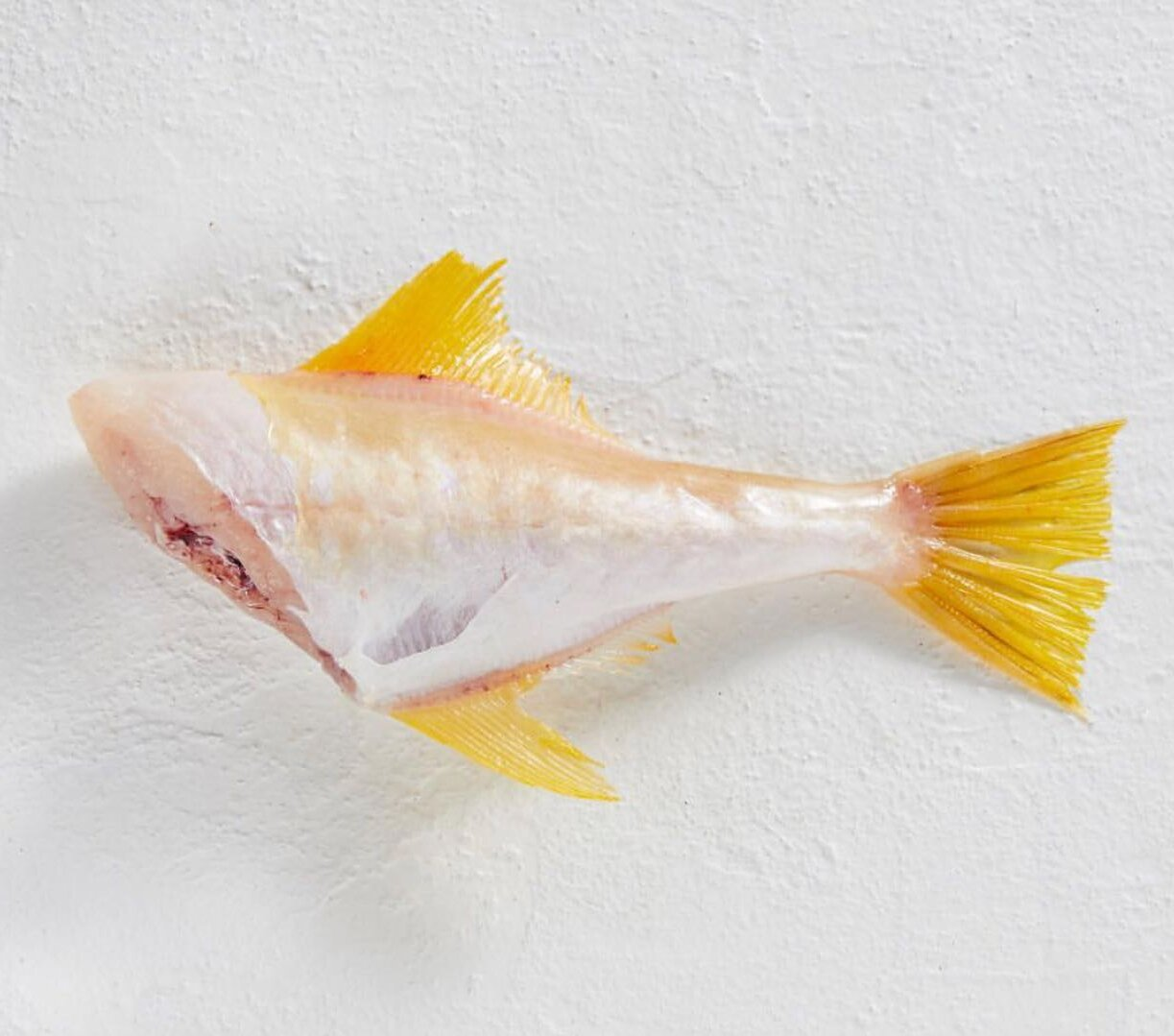 Wild Australian yellow fin skinned fish