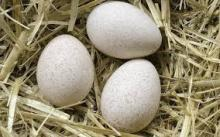 Ostrich Eggs and Ostrich Feathers