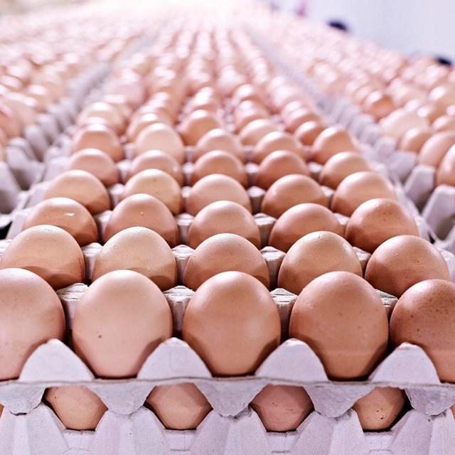 Brown And White Farm Fresh Chicken table Eggs