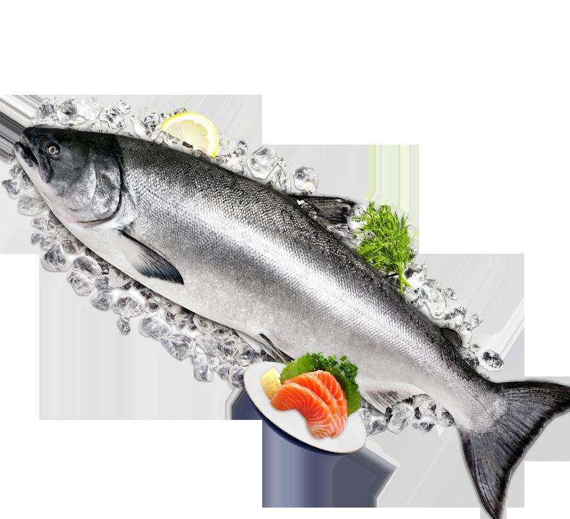 Buy frozen Salmon