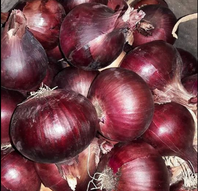 Supply red onion from Egypt
