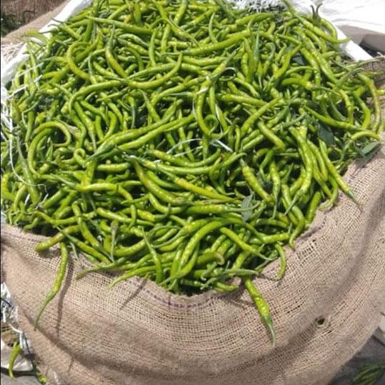 Indian Fresh Green Chili Vegetable