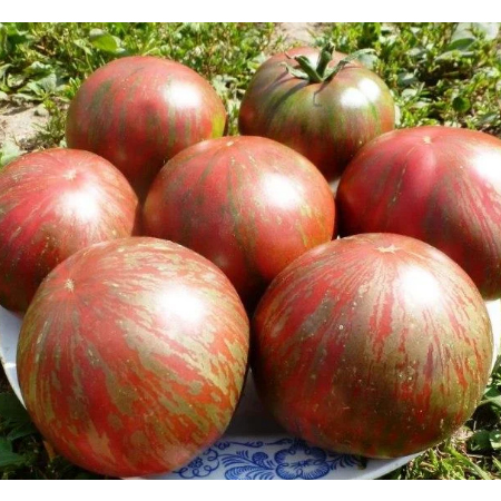 Imported tomatoes, large tomatoes, yellow tomatoes, fruits and vegetables, Russia, pork chop