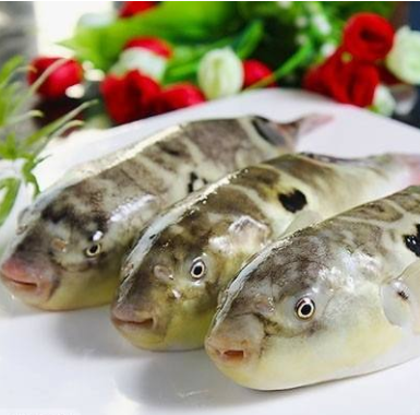 Purchase imported fish, cuttlefish