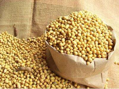 Buy Soybean