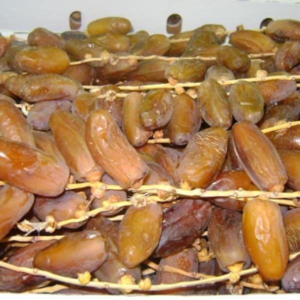 Offer Deglet noor dates for export from tunisia
