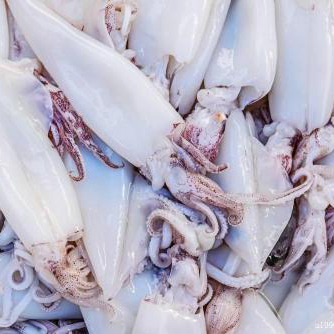 Frozen squid ( sleeve-fish ) raw material